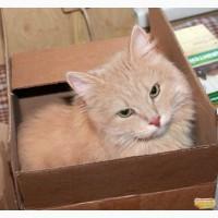 Застенчивый котик по имени Виски ищет дом