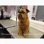 Груминг услуги для собак и кошек. Подготовка к выставке