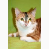 Котенок Глория – трехцветная радость в поисках дома