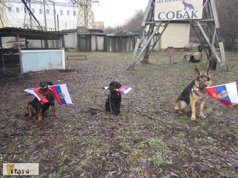 Фото 1/4. Дрессировка собак в северном округе