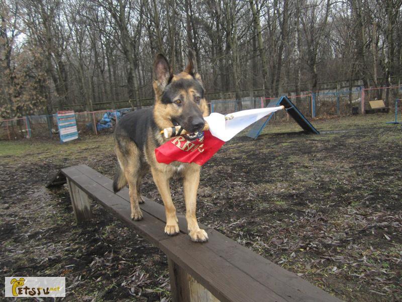 Фото 2/4. Дрессировка собак в северном округе