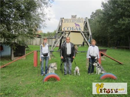 Фото 3/4. Дрессировка собак в северном округе