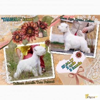 Питомник Талисера РКФ.предлагает щенков