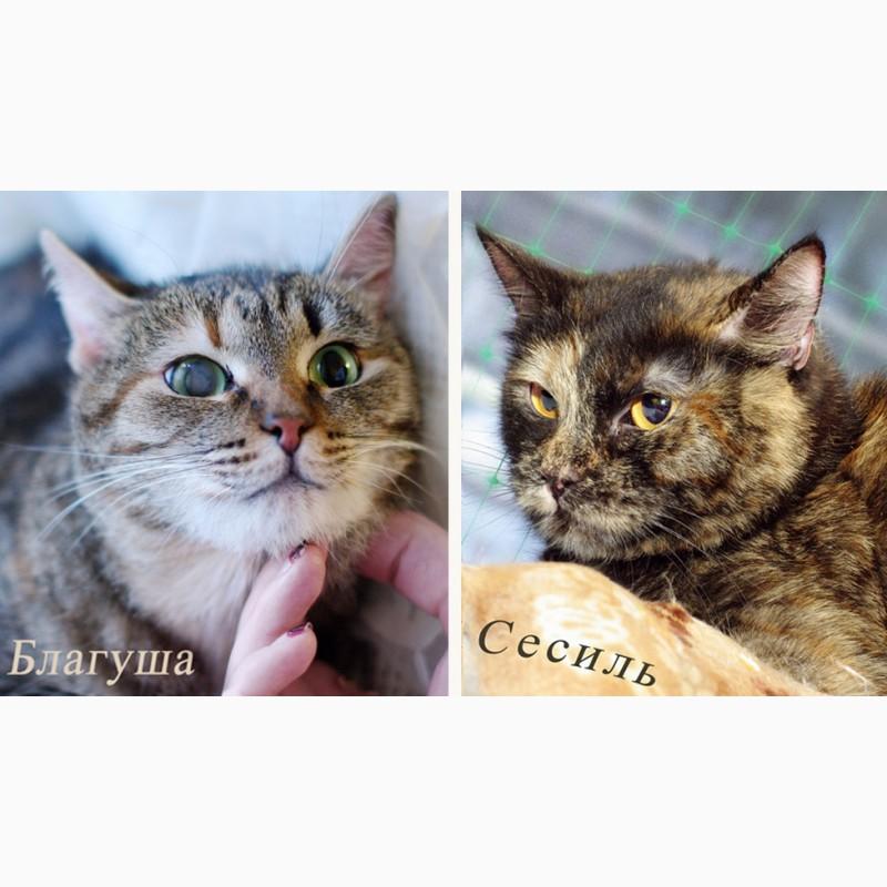 Фото 1/5. Приютские кошки со сложным характером, им сложно найти дом