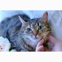 Приютские кошки со сложным характером, им сложно найти дом