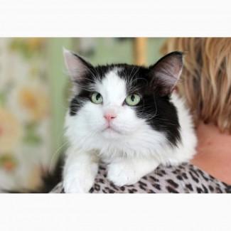 Потерянный Космос - кот, который хочет обрести семью