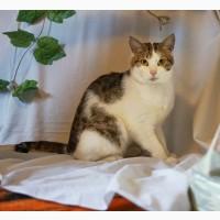 Мудрый кот Харитон в добрые руки