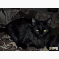 Кошка ангорская в Казани