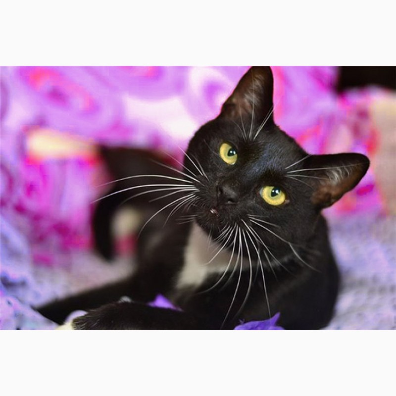 Фото 2/6. Ася - кошка, излучающая доброту ищет дом