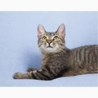 Котенок девочка звездочка-Феруза в дар