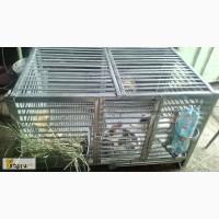 Клетка для кроликов на 8 голов в Ачинске