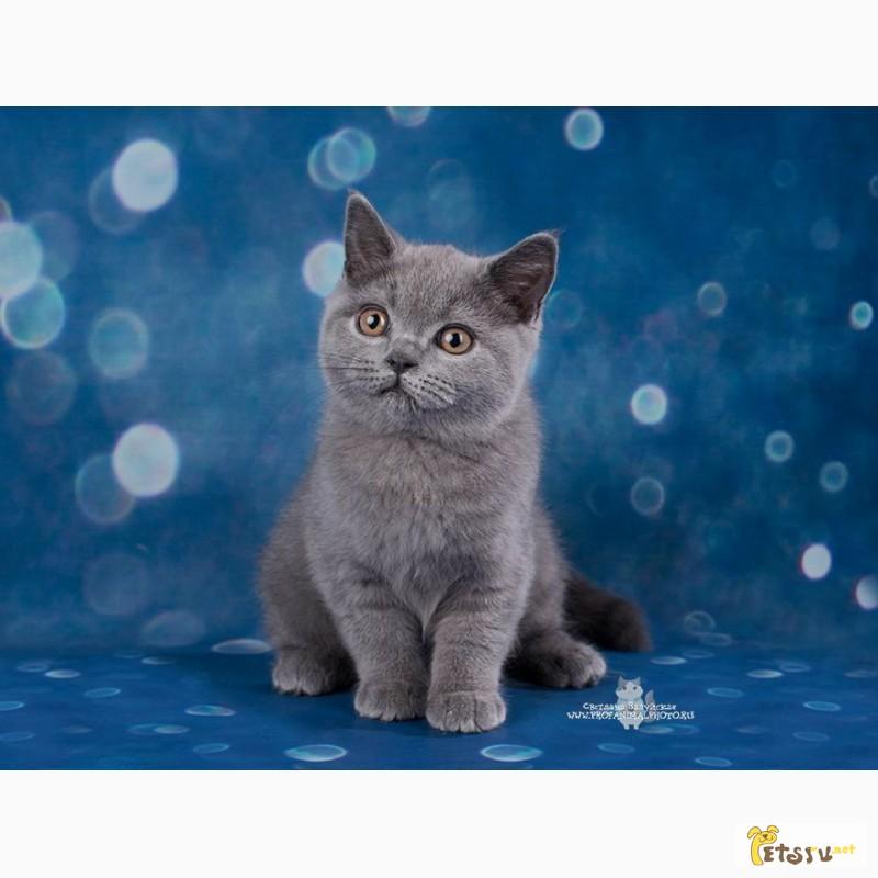 Фото 2/7. Британские котята