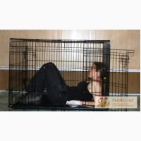 Большая складная клетка для собак в Санкт-Петербурге