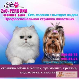 Стрижка Йорка, собак и кошек . Тримминг собак на дому. Груминг салон «ZoO-PERSONA». АКЦИИ!