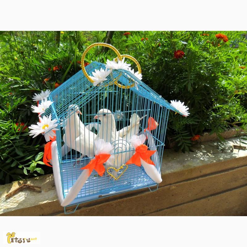 Фото 2/14. Белые голуби для свадьбы