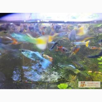 Неприхотливые аквариумные растения и мхи 31 вид
