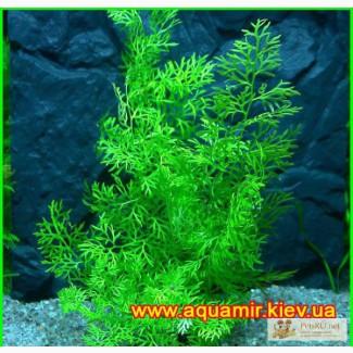 Растения для аквариума в Мурманске