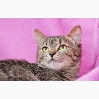 Ищет дом замечательная котенок Шоколадка