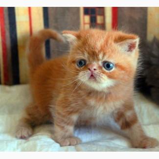 Экзотический котик Гарфилт
