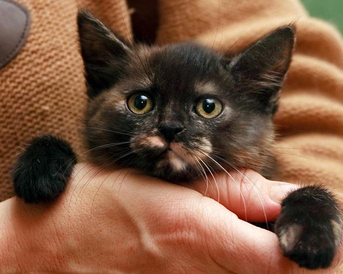 Фото 2/8. Крошка котенок Мерседес в дар