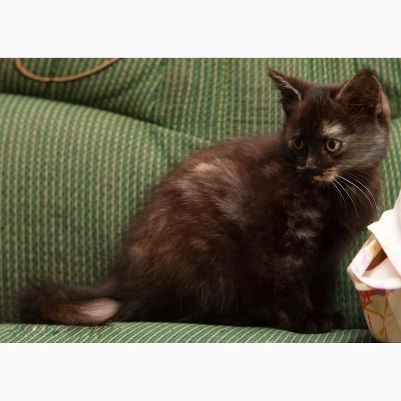 Фото 3/8. Крошка котенок Мерседес в дар
