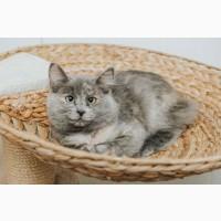 Ищет дом маленькая славная кошка Фунтик