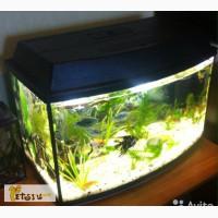 Аквариум с рыбами на 70 литров в Нижнем Новгороде