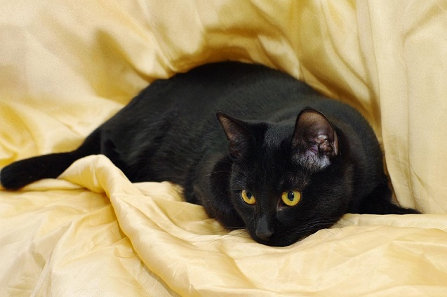 Фото 1/7. Изящные пантерки котята Лилит и Раиса ищут дом