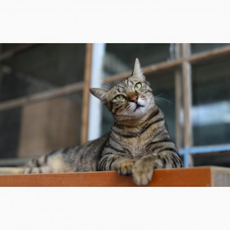 Матроскин кот красавчик в дар