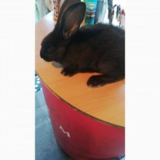 Кролик ищет дом