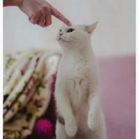 Чудо кошка в добрые руки