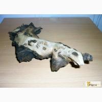 Коряга мангровая 11х27 см вымоченная в Челябинске