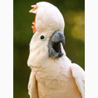 Приму попугая в дар