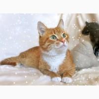 Кот Чупачупс - рыжий обнимательный котик в дар