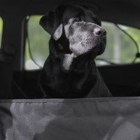 Автогамак для перевозки собак в машине - Чёрный