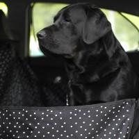 Автогамак для перевозки собак в машине - Белые горошины на чёрном