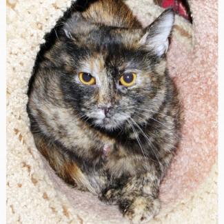 Некрасивая кошка Власька ищет дом
