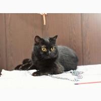 Роскошная кошка Исабель